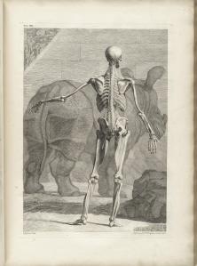 Bernhard Siegfried Albinus: Tabulae sceleti et musculorum corporis humani
